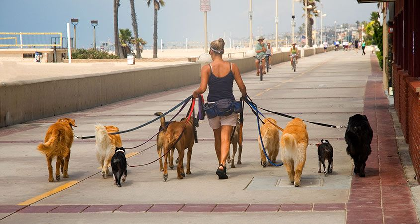 Retirement time available to walk dogs