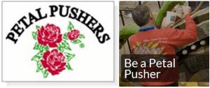 petal pushers 2019