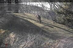 Deer grazing in Grand Haven