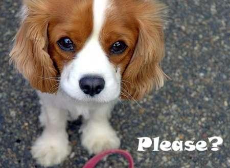 begging-dog