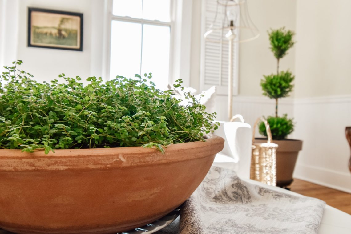 5 Simple Ways to Welcome Spring plants