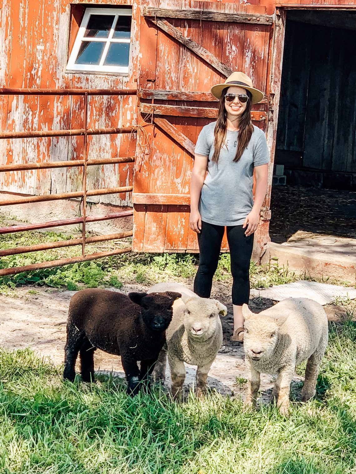 This Week at the Farm 16: Lambs, Chicks, Garden