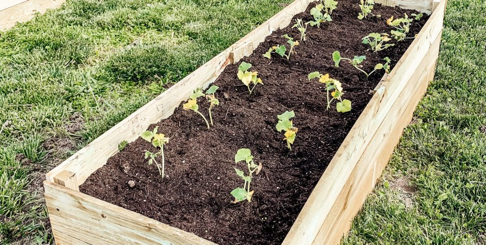 Easy, Inexpensive DIY Raised Garden Beds