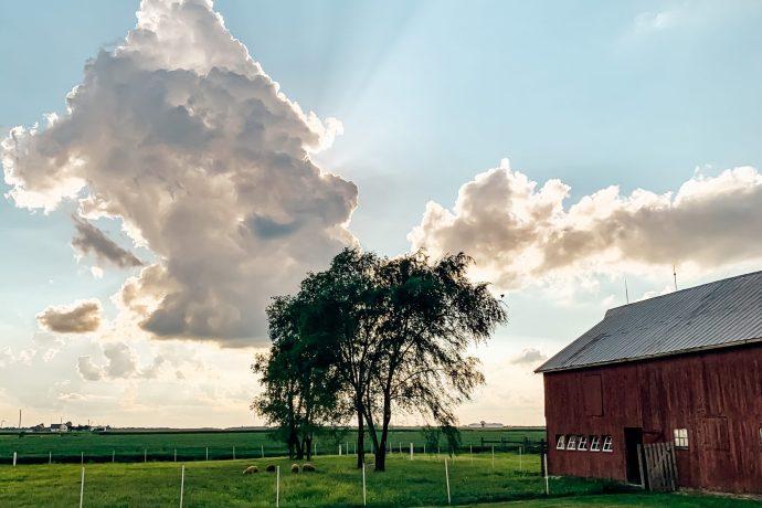 This Week at the Farm: Small Tasks Big Impact