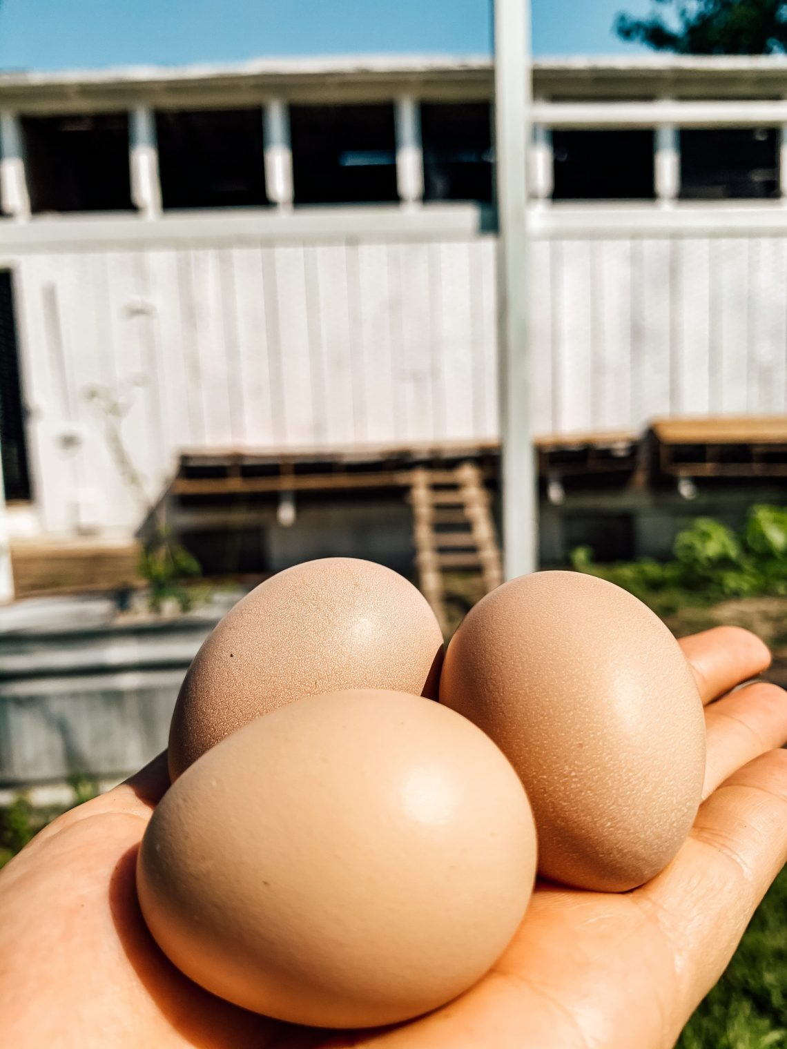 Weekly Farm Update: Farmhouse Projects and Eggs