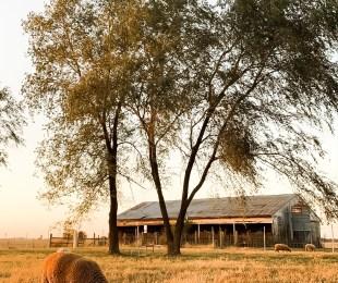 Weekly Farm Update: Goodbye October
