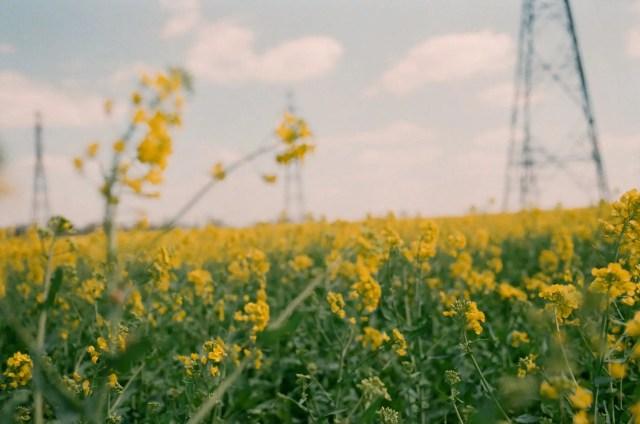 blooming wildflowers on meadow near power line