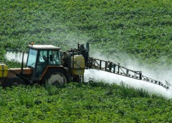 Crop-spraying in Meteren, northern France: glyphosate can have a big impact on biodiversity