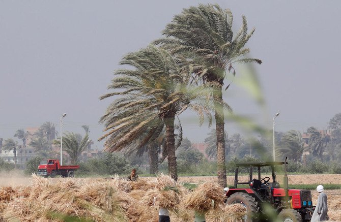 Farmers harvest wheat at a farm on the outskirts of Cairo, Egypt. (File photo: Reuters)