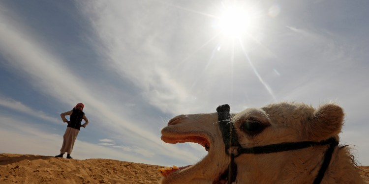 Mohamed Mostafa looks on during the opening of 18th International Camel Racing festival at the Sarabium desert in Ismailia, Egypt, March 12, 2019. Picture taken March 12, 2019. REUTERS/Amr Abdallah Dalsh