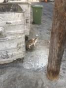 Random kitty 1.