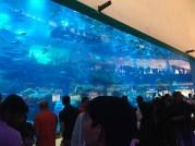 Massive aquarium.