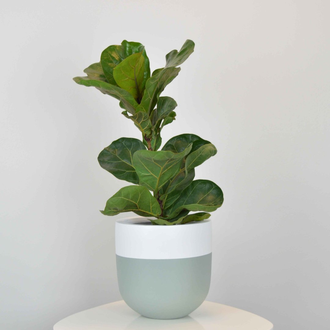 Common House Studio Planter