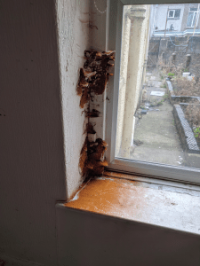 dry rot on window frame