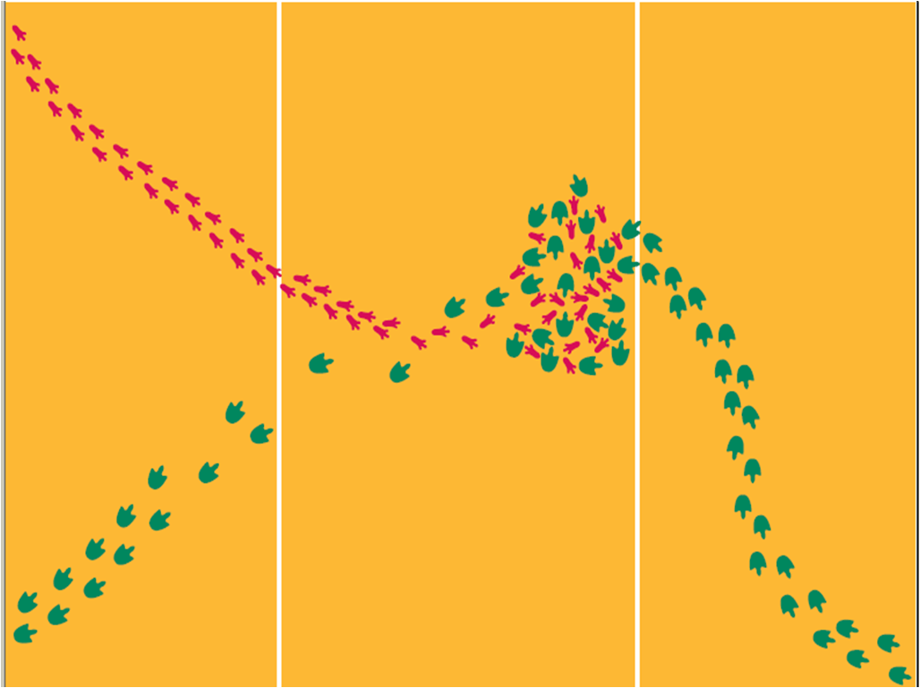 Mystery Footprints Observation Vs Inference Middle