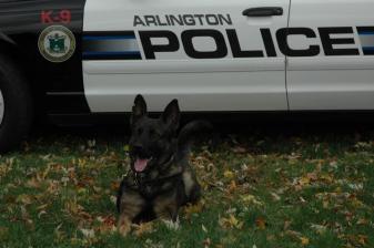 Arlington Police K-9