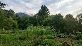 July 2015 - lush garden