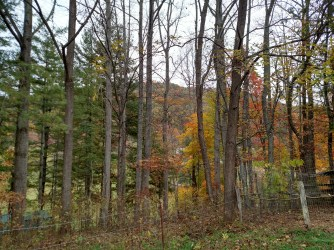 Oct 2015 - fall color1