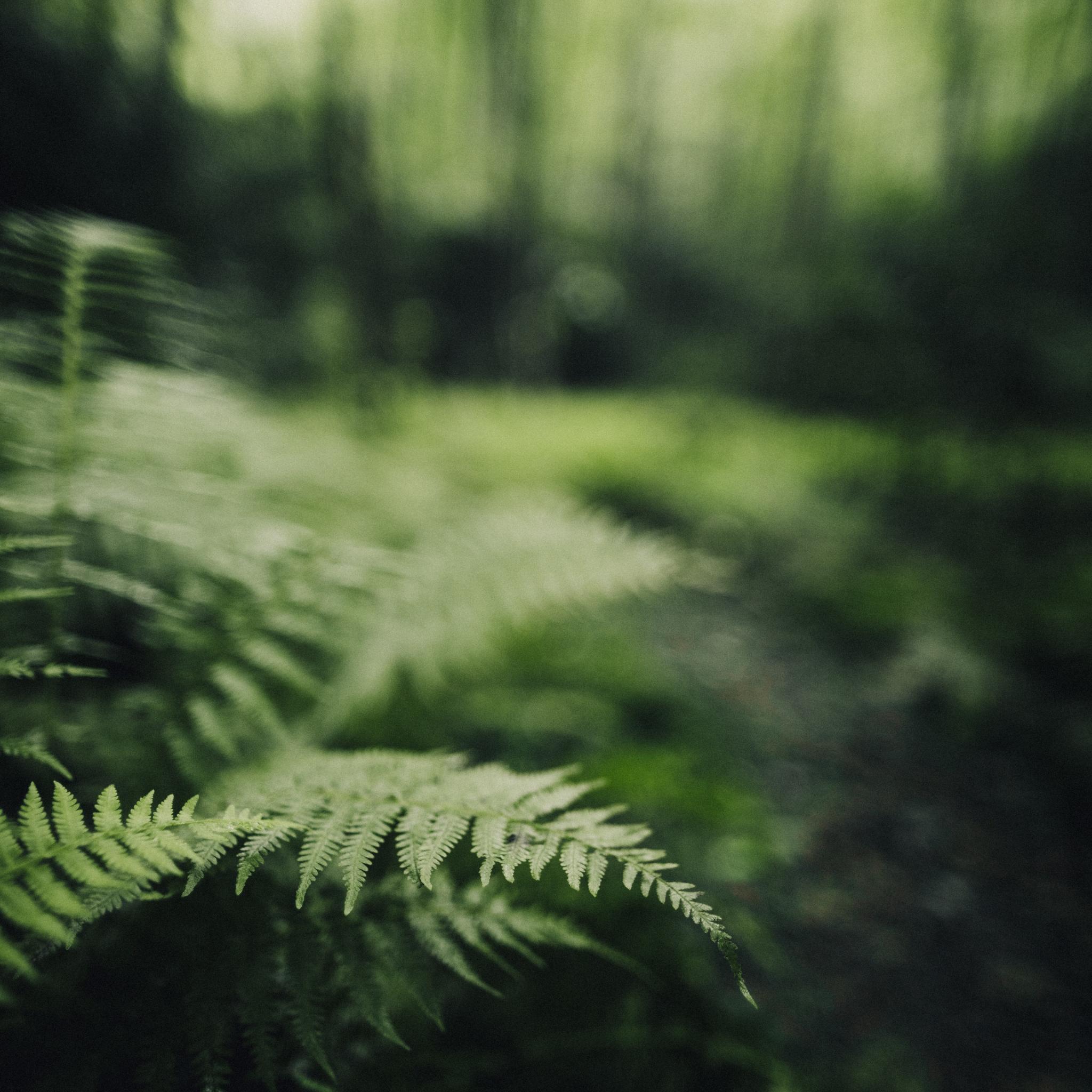 しだ植物の画像