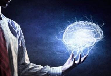 cerebro - O Cérebro…