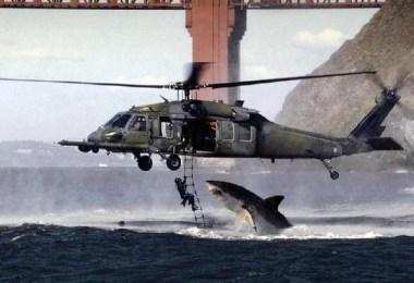 Curiosidades, Entretenimento, Jornalismo, Comunicação, Marketing, Publicidade e Propaganda, Mídia Interessante shark-helicopter-fake-picture Foto do Ano' de tubarão e helicóptero era um simples trote de e-mail Curiosidades Fotos e fatos  Foto do Ano' de tubarão e helicóptero era um simples trote de e-mail