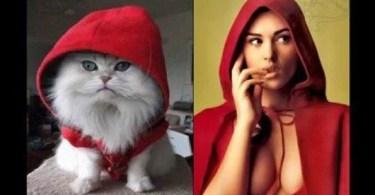 gata igual - Gatas fazendo mesmas poses que seus gatos