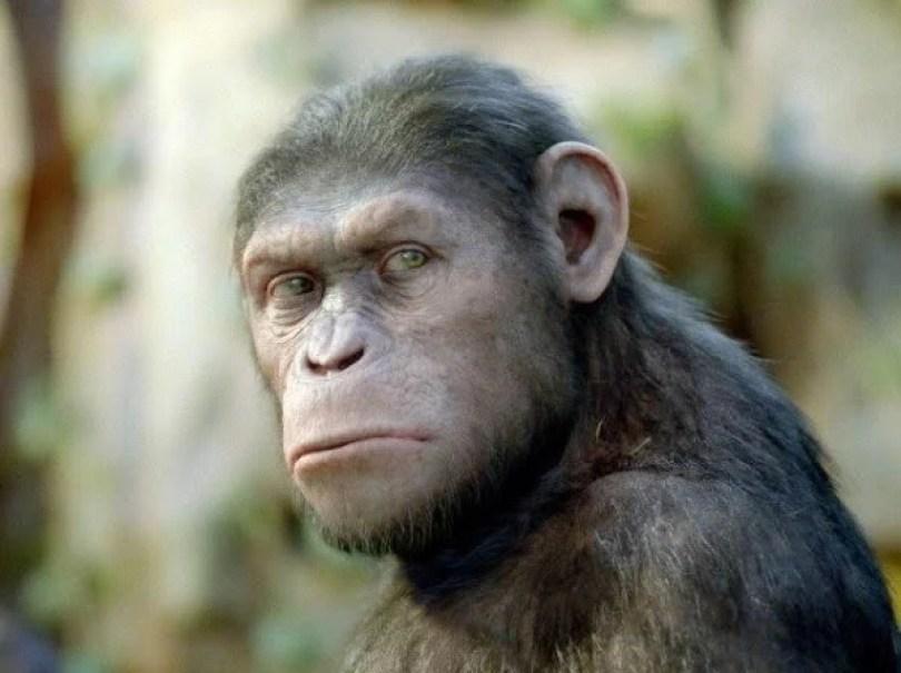 planeta dos macacos - Planeta dos Macacos - A revolução foi na Terra