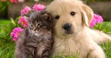 cao - Brasileiros possuem mais cães que gatos, diz pesquisa
