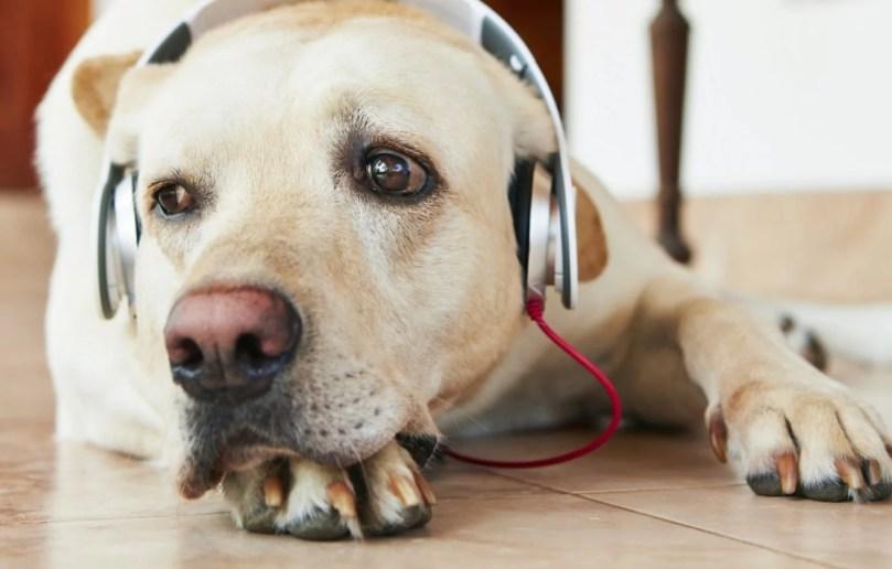 cachorro e rock - Pesquisa aponta que cachorros são do Rock e do Reggae!