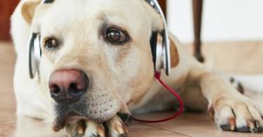 cachorro e rock - Incrível! O canal Indiano T-series ultrapassa sueco Piew de Pie em visualizações