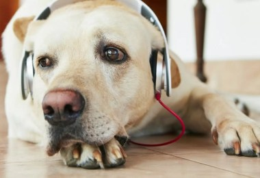Fotos, Curiosidades, Comunicação, Jornalismo, Marketing, Propaganda, Mídia Interessante cachorro-e-rock Pesquisa aponta que cachorros são do Rock e do Reggae! Curiosidades Dicas de Sites Música  Pesquisa aponta de cachorros são do Rock e do Reggae