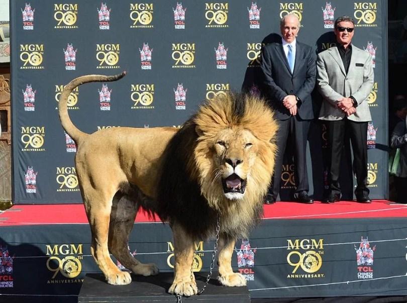 leaomgm8 - Como foi tirada a foto do leão da MGM?