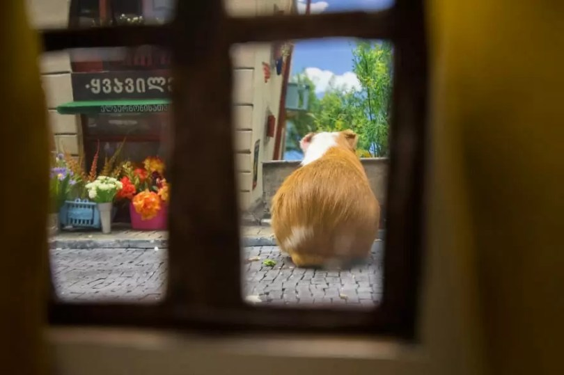 """Crafted miniature town for HUNGRY HUNGRY HAMSTERS online series 5935d54b803bf  880 - Genial! Artistas criam uma """"mini cidade"""" para Hamsters"""