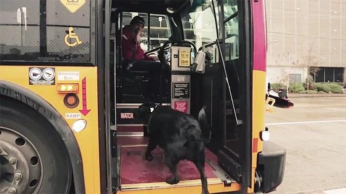 cachorro pega onibus - Cachorro pega todos os dias ônibus para ir ao parque