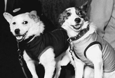 Fotos, Curiosidades, Comunicação, Jornalismo, Marketing, Propaganda, Mídia Interessante animais-no-espaço-soviet-space-dogs-1 Fatos Interessantes sobre as cadelinhas no espaço Curiosidades Universo  Cachorros no espaço
