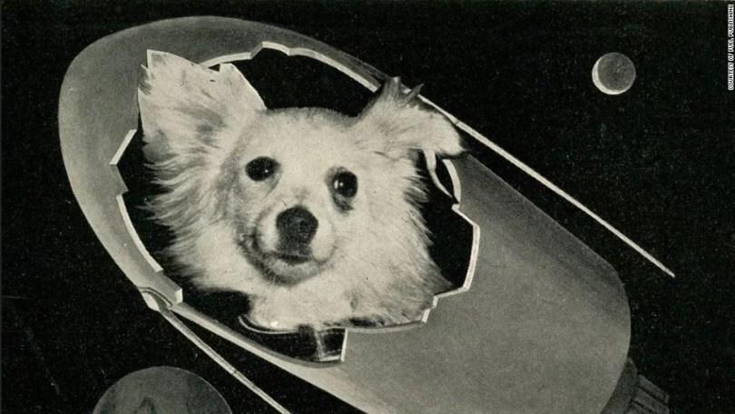 animais no espaço soviet space dogs 7 - Fatos Interessantes sobre as cadelinhas no espaço
