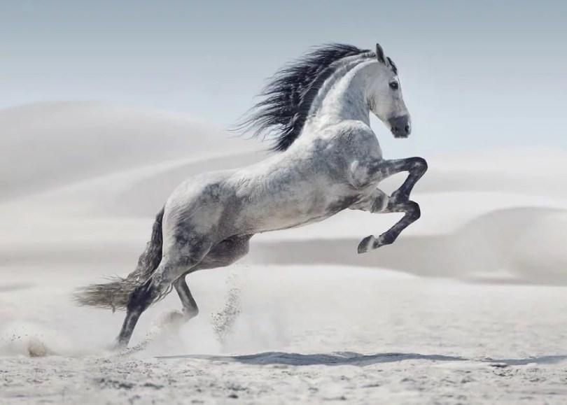 cavalos selvagens fotos profissionais 1 - Fotos lindas capturadas de cavalos selvagens