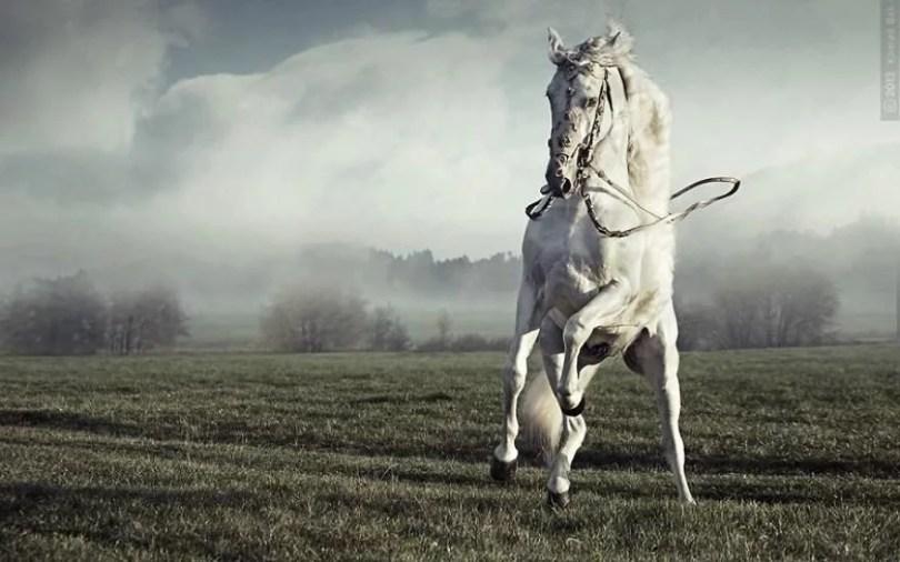 cavalos selvagens fotos profissionais 8 - Fotos lindas capturadas de cavalos selvagens
