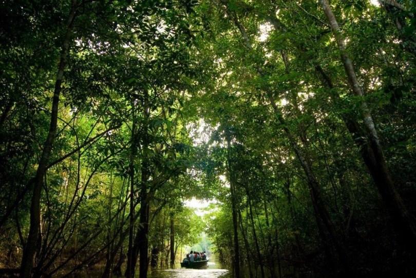 Fotos, Curiosidades, Comunicação, Jornalismo, Marketing, Propaganda, Mídia Interessante documentario-amazonia Documentário: Amazônia Desconhecida - Discovery HD Televisão