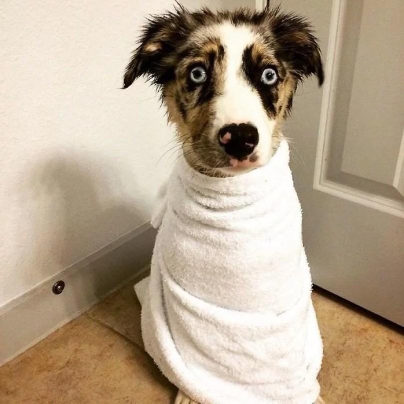 cachorros tomando banho gato pets1 - Pets e a hora do banho!