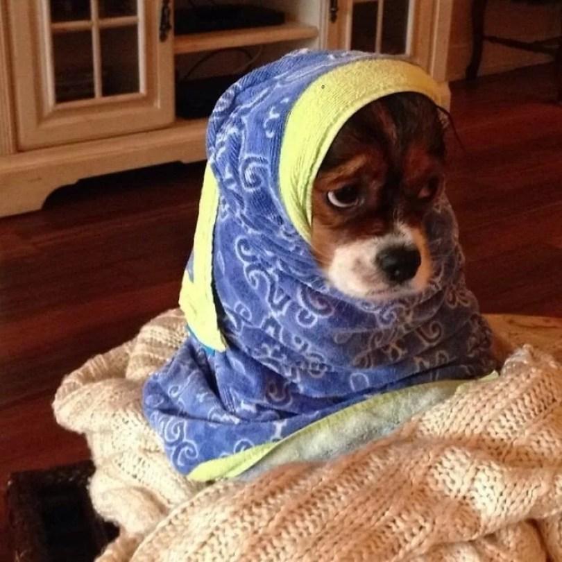 Fotos, Curiosidades, Comunicação, Jornalismo, Marketing, Propaganda, Mídia Interessante cachorros-tomando-banho-gato-pets17 Pets e a hora do banho! Cotidiano Fotos e fatos  hora do banho