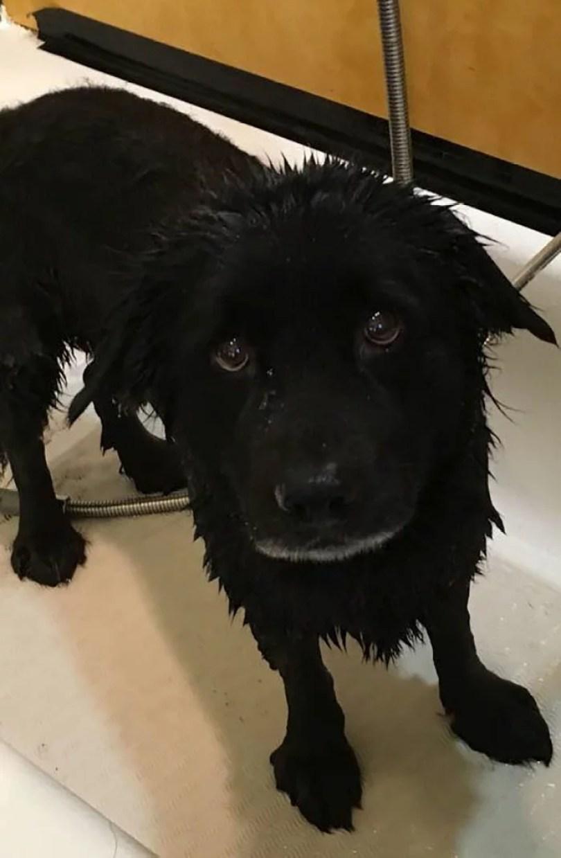cachorros tomando banho gato pets31 - Pets e a hora do banho!