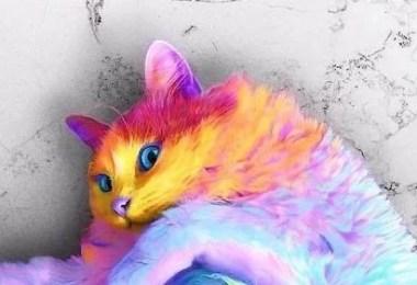 gatinho - Como seria um mundo colorido?