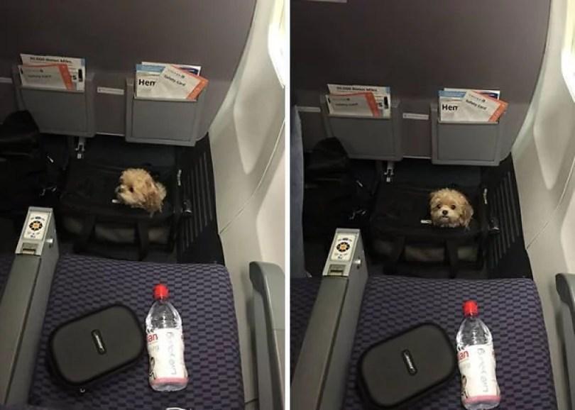 animais em voo permitido avião 16 - Afinal, é permitido animais em voos dentro do avião?