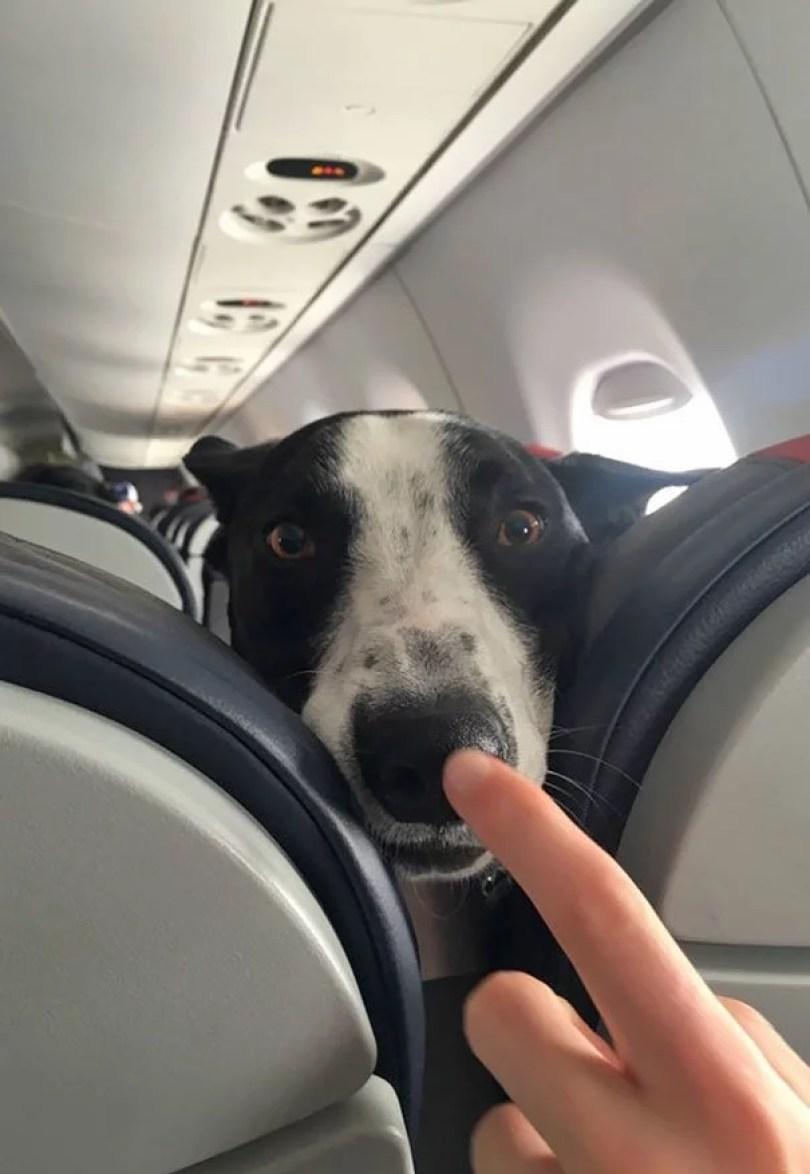 animais em voo permitido avião 33 - Afinal, é permitido animais em voos dentro do avião?