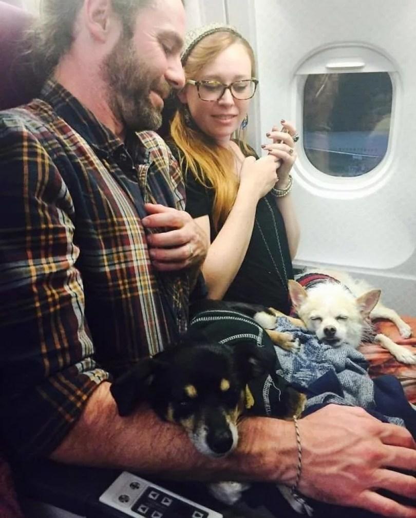 animais em voo permitido avião 45 - Afinal, é permitido animais em voos dentro do avião?