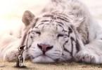 animals gigants 11 - Photoshop: Imagine um mundo com animais gigantes