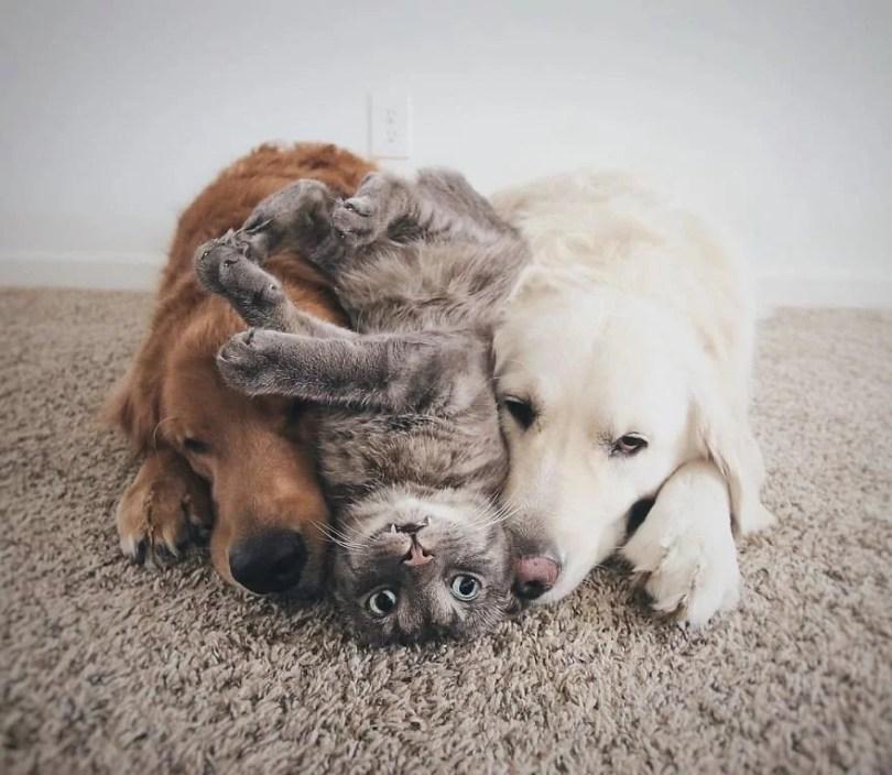 caes e gatos amigos - Book fotográfico de cães e gato melhores amigos