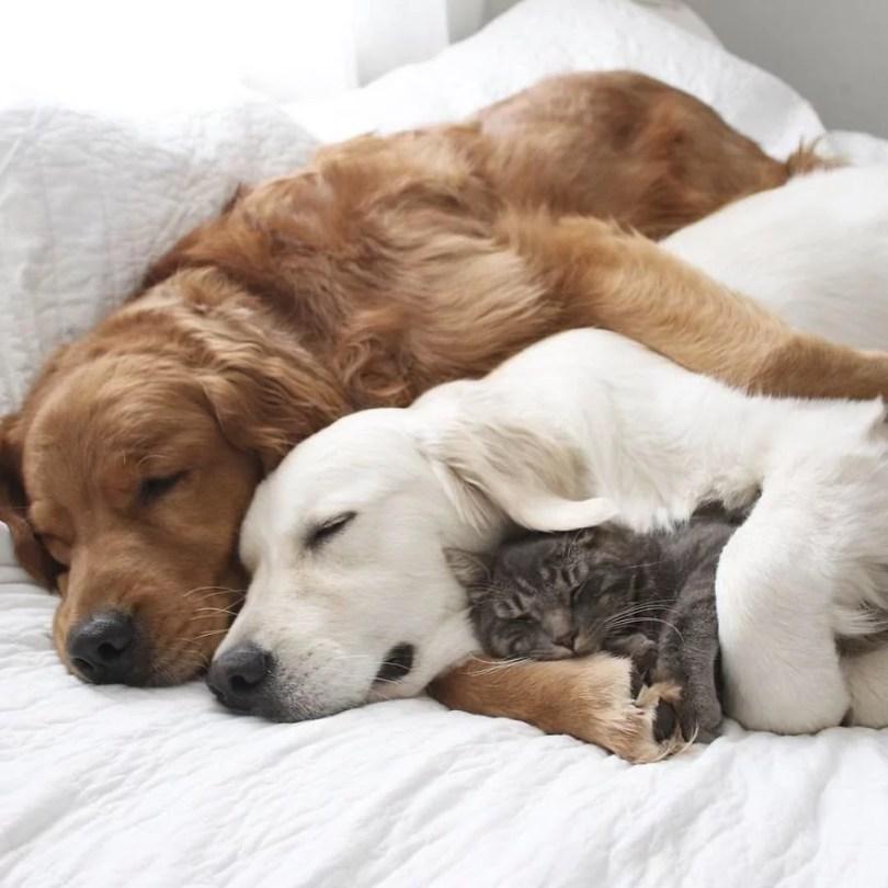 caes e gatos amigos12 - Book fotográfico de cães e gato melhores amigos