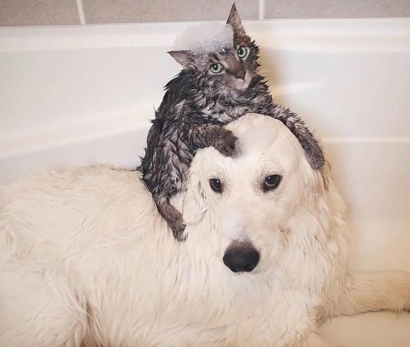 caes e gatos amigos9 - Book fotográfico de cães e gato melhores amigos